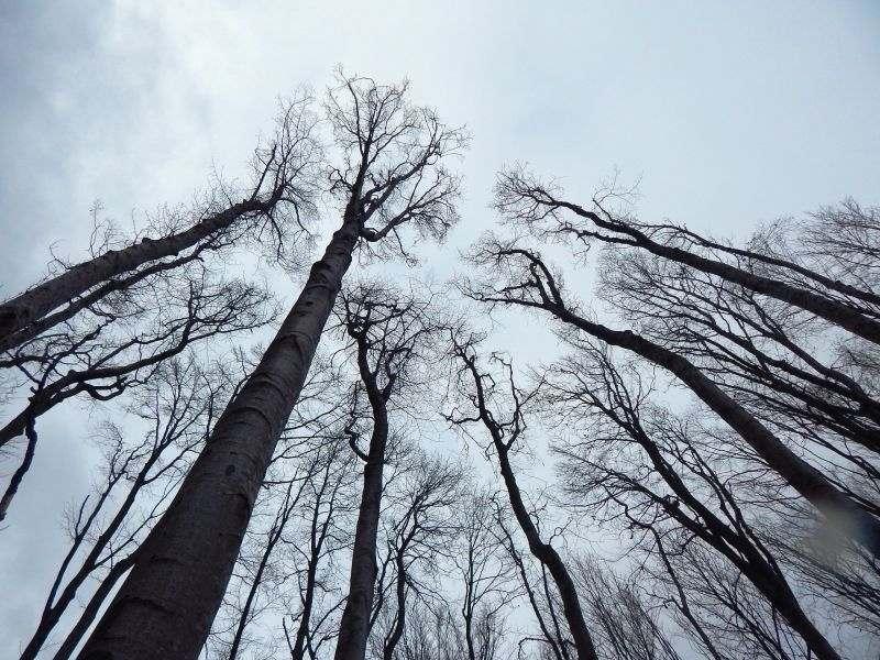 drveće dodiruje nebo, šuma