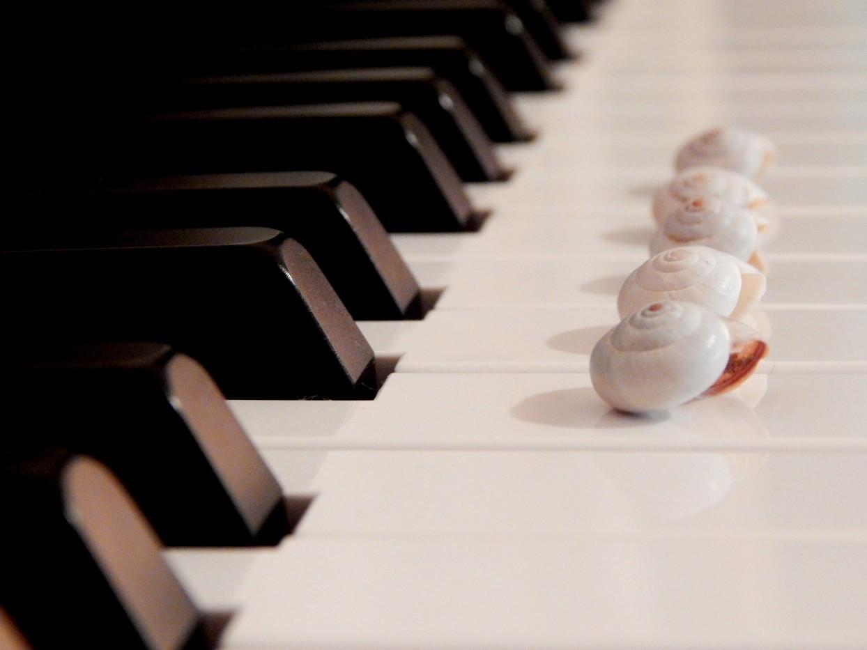 Muzika, klavir, školjke u nizu stoje na dirkama klavira